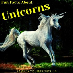 Fun Facts About Unicorns